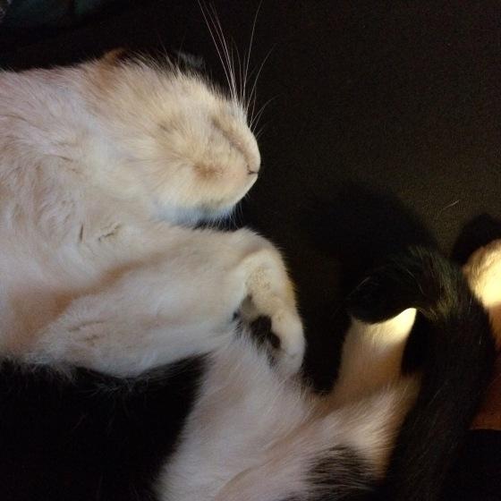 cat naps > med stats